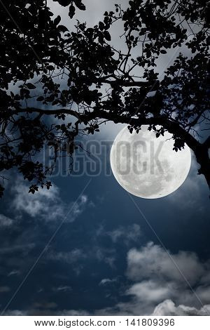 Silhouette Of The Branches Of Trees Against The Night Sky In A  Moon. Outdoors.
