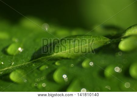 Greeb leaf covered in  small rain drops