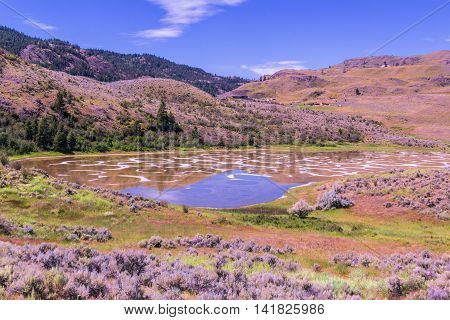 Photo of Spotted Lake at summer hot day, British Columbia