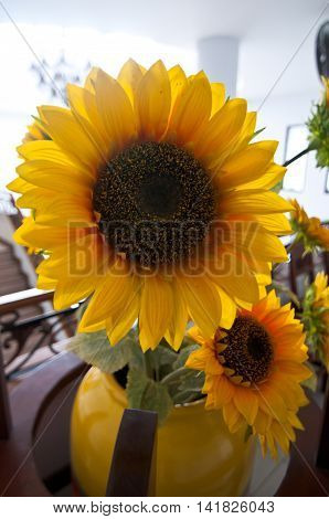 Big yellow sunflower bloom, decoration in home