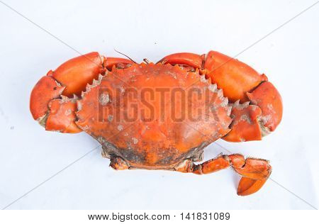 Big one Steamed crab on white background
