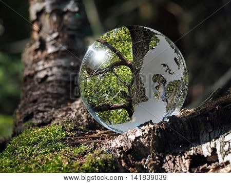 Big tree - reflection within the transparent ball in the forest.