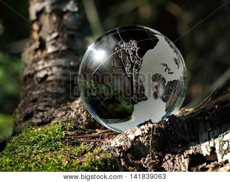Little macrocosm inside a transparent ball in the forest. Reflection of lichens
