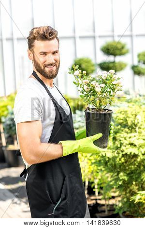 Portrait of a handsome gardener in apron and working gloves holding a pot with flower in the greenhouse. Plant seller taking care of flowers in the shop