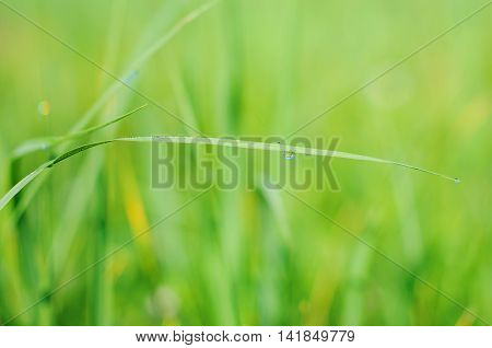 green grass on green background in summer