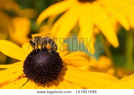 Colorful bee sitting on yellow flower closeup