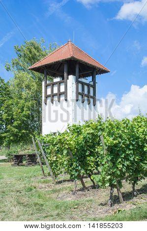Vineyard with Watchtower and picnic Area in Wine region of Rheinhessen in Rhineland-Palatinate,Germany