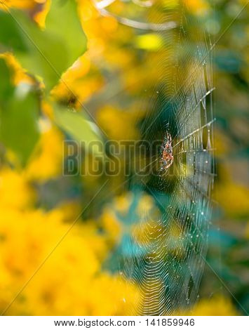 Summer Mood: Spider wove a web of its own in the bush