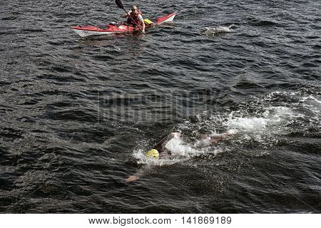 FREDERICIA DENMARK - AUGUST 6 2016: Triathlet swimming and lifeguard in kayak with a following dolphin at triathlon competition Challenge Denmark in Fredericia Harbor August 6 2016.