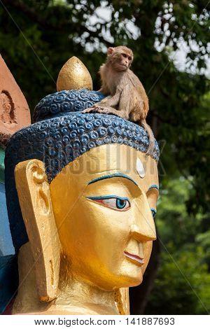 A shot of Golden Buddha Statues in Kathmandu, Nepal.