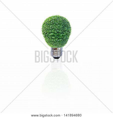 Energy saving lamp of tree with shadow on white background. Concept for saving energy, global warming, Earth Day, Go Green and save the world.