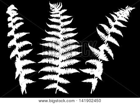 illustration with set of fern silhouettes isolated on black background