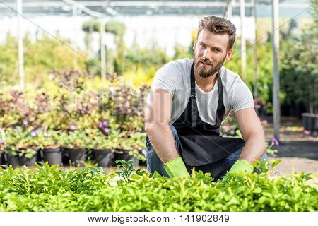 Portrait of a handsome gardener in apron with green plants. Worker taking care of plants in the hotbed.