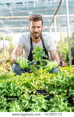 Portrait of a handsome gardener in apron with green plants. Worker taking care of plants in the hotbed. poster
