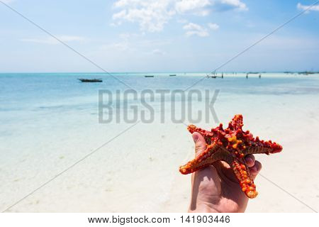 beautiful seascape with red starfish in hand and ocean on the background