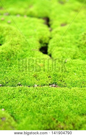 Moss brick, Moss grows in moist areas.