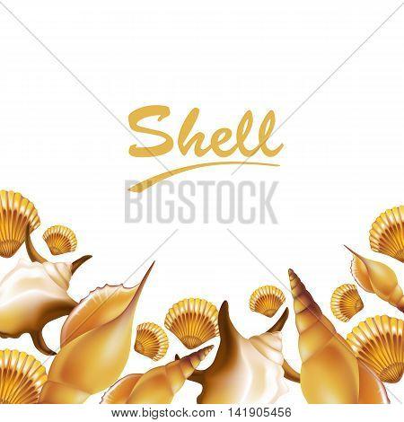 Shells on white background frame. Vector illustration.