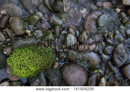 Mossy in rock in creed bed of Catskills New York during evening hour