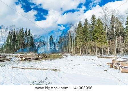 Cutting down trees in the winter forest