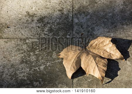 Photo of a dry leave with ( sun and shadow) and sunlight