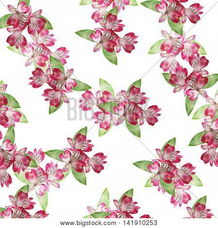 Beautiful floral background with isolated pink alstroemeria