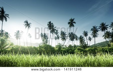sunset in jungle and grass