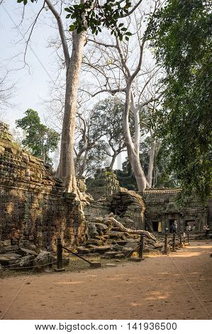 ANGKOR WAT CAMBODIA - JANUARY 27 2015: Ruins of Ta Prohm temple in Angkor Wat. Angkor Wat is the largest Hindu temple complex and religious monument in the world