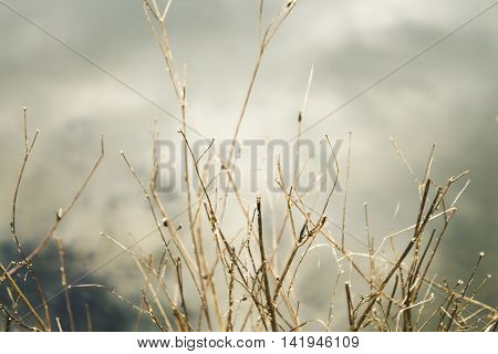 The branches of the old plant in shallow depth of field, creative autumn background bed