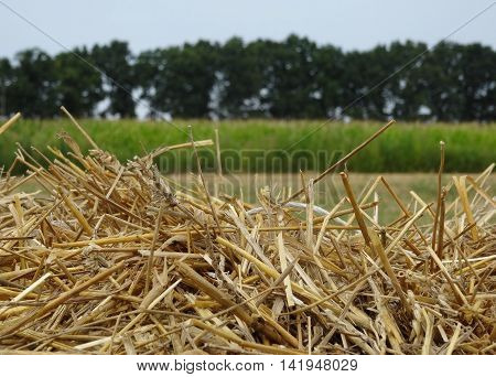 Top of hayrick on the field after summer harvesting stock image