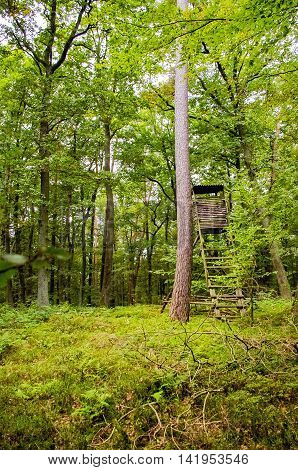 Abandoned observation tower in the forest for rangers.