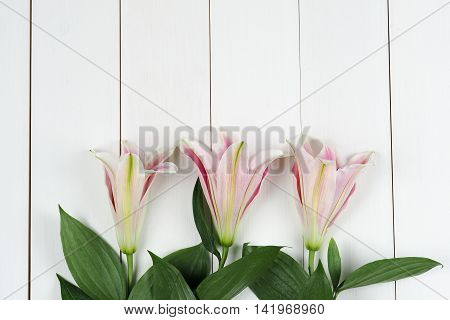 Lily Flowers Arranged On Table Top White Wood Board