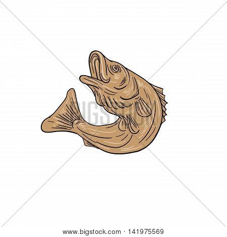 Drawing sketch style illustratoin of a rockfish also called striped bass Morone saxatilis Atlantic striped bass striper linesider pimpfish or rock jumping up set on isolated white background.