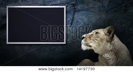 grunge background with monitor and lion