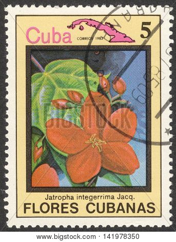 MOSCOW RUSSIA - CIRCA MAY 2016: a post stamp printed in CUBA shows Jatropha integerrima flower the series