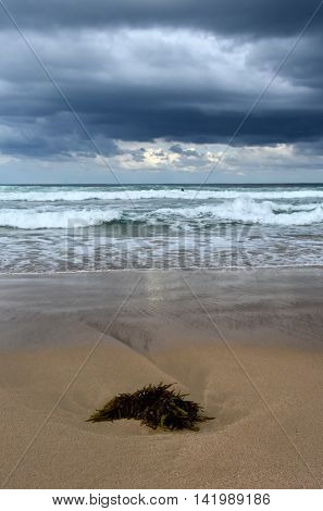 Seaweed on Cronulla beach. Stormy clouds and beach-combers in the background. poster