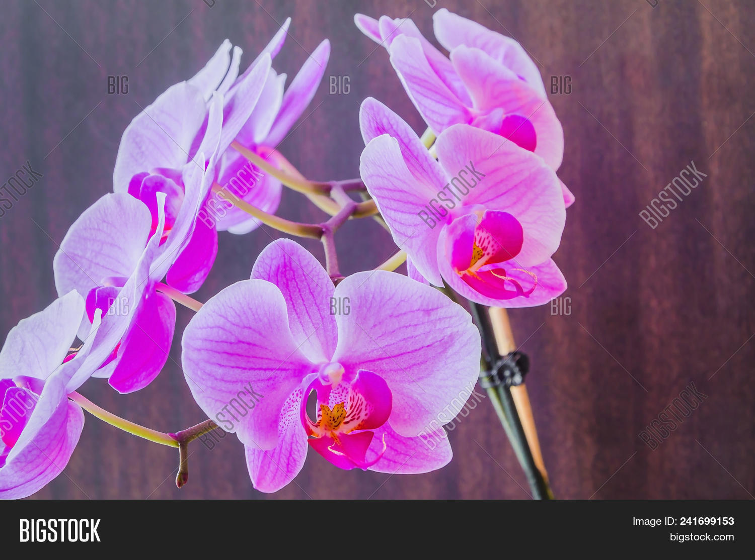 Bright Beautiful Image Photo Free Trial Bigstock