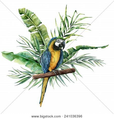 Watercolor Parrot With Tropical Leaves. Hand Painted Parrot With Monstera, Banana And Palm Greenery