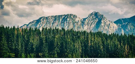 Giewont Mountain, Inspiring Mountains Landscape, Beautiful Day In Summer Tatras, Flowers And Mountai