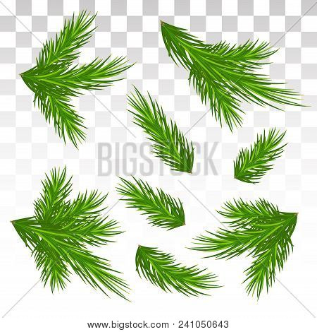 A Large Set Of Different Green Pine Branches. Isolated. Christmas. Decor. Green Lush Spruce Or Pine