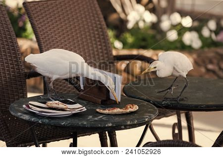 Birds Eat Pizza Scraps From Table In Outdoor Cafe. Leftover Food, Forage, Feed. Nature, Animal, Faun