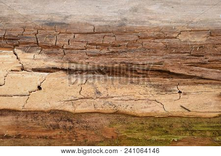 Old Wooden Background Wooden Texture Texture. Wooden Background. Tree Texture. Tree Background. Crac