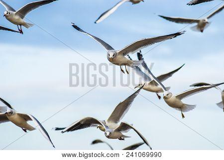 Gulls Flying In The Air.gulls Flying In The Air.