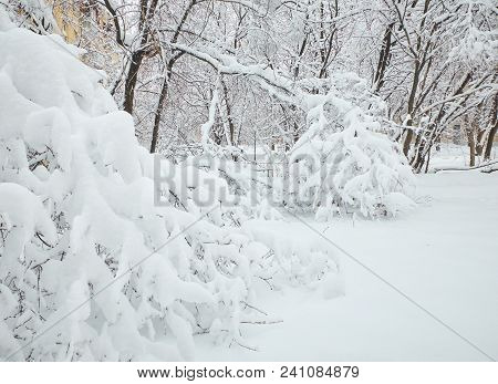 Winter View On Fallen Trees On Streets. Trees Under Snow. Snow Covered Fallen Trees. Dangerous Tree