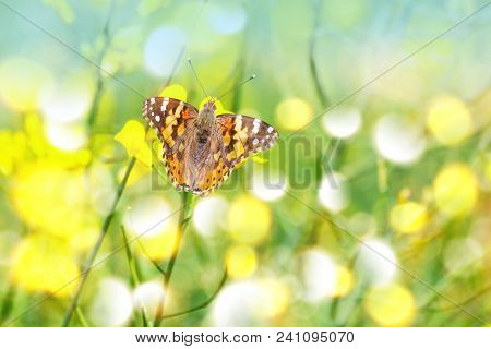 Nice Butterfly Between Yellow Flowers With Bokeh And Lensflares