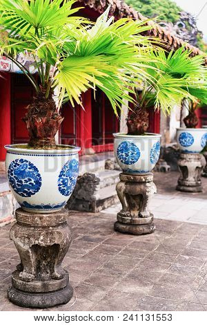 Palm Trees In Flowerpots In Emperial City Kinh Thanh In Hue, Vietnam