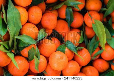Citrus Fruit Background. Fresh Tangerines (mandarines, Clementines, Citrus Oranges)  With Green Leav