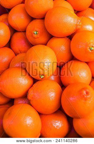 Citrus Fruit Background. Fresh Tangerines Or Mandarines, Clementines, Citrus Oranges. Harvest Concep