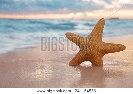 red starfish on  sand beach, with ocean sky and seascape, shallow dof