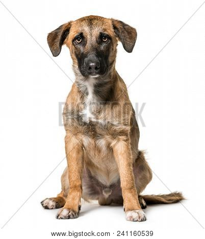 Mixed-breed dog , 7 months old, sitting against white background
