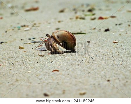 Hermit Crab In Nature On The Sand.